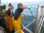 Pesca de pulpo en Lira, A Coruña