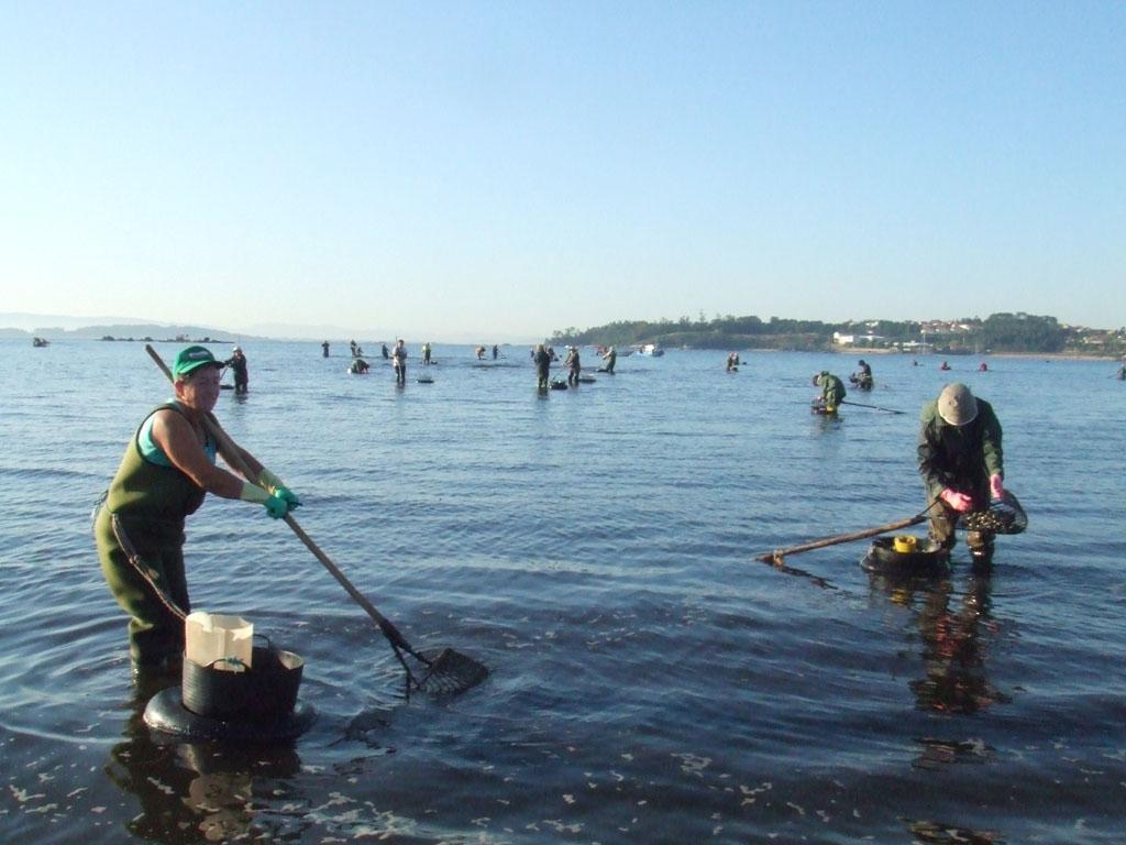Marisco de Galicia, Mariscadoras a pie
