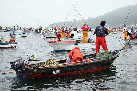 Marisqueo flote en Ría de Noia (Foto: Pablo Silva -El Correo Gallego)
