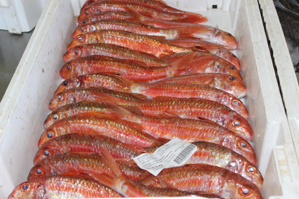 Marisco y pescado gallego: el salmonete, rico en vitaminas del grupo B, en fósforo, potasio, magnesio y yodo