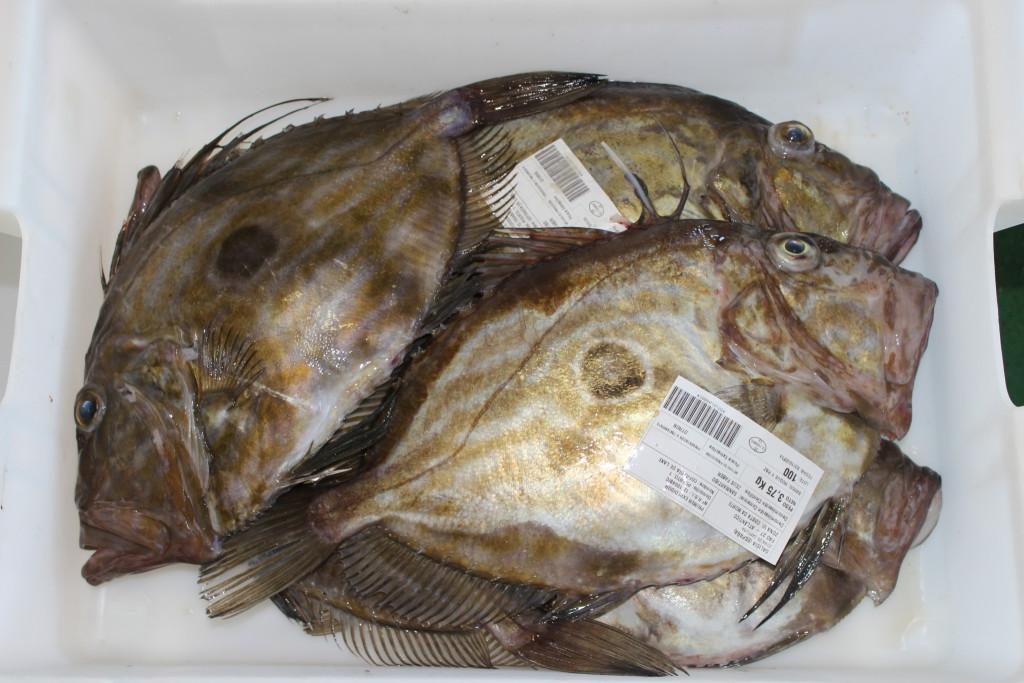El pescado, fuente de proteinas, minerales, vitaminas, omega 3...