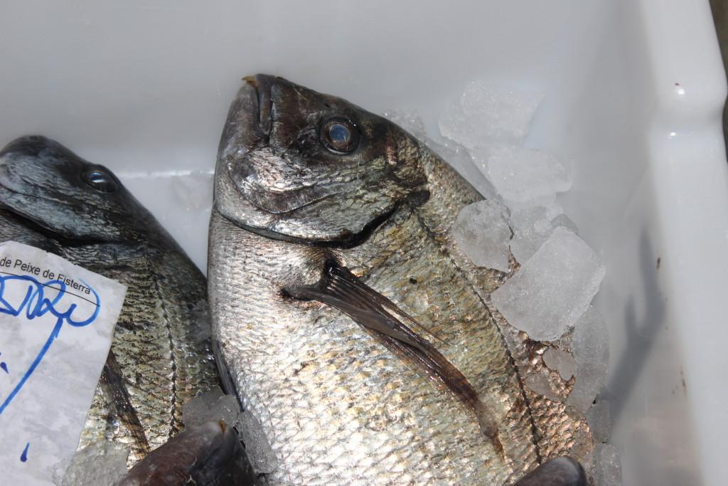 El pescado debe estar bien seco antes de su congelación