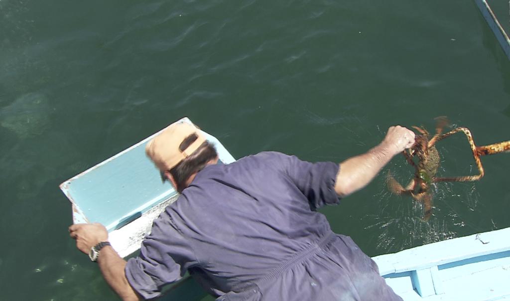 Pesca de centola con gancho/espejo (Foto SAGA TV)