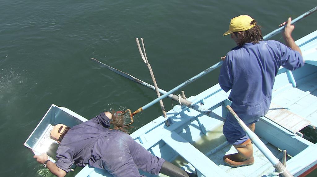Pesca de centolla con gancho (Foto: SAGA TV)