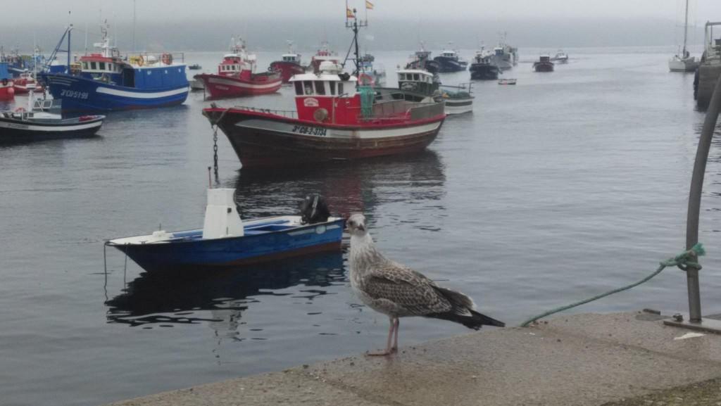 Flota amarrada en el Puerto de Fisterra