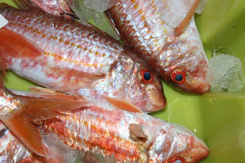 Pescado fresco: Salmonetes de Costa da Morte