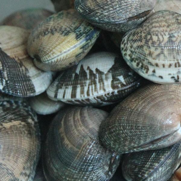 marisco gallego: comprar almeja babosa