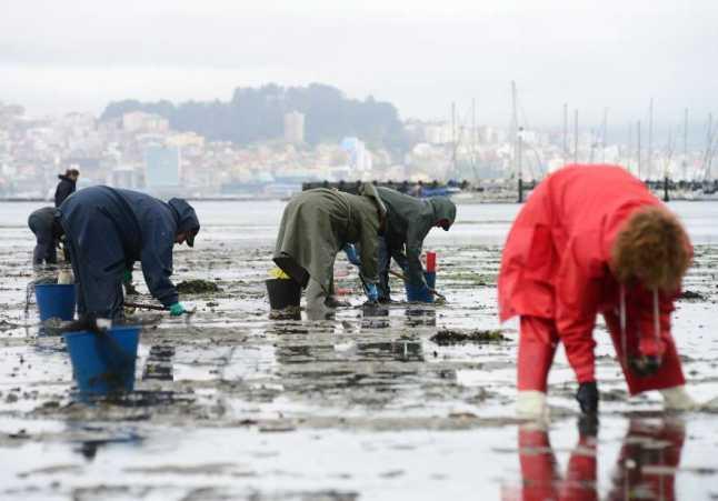 Marisqueo: Mariscadoras en O Morrazo (Foto: FARO DE VIGO)