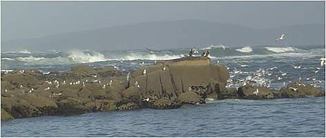 """RMIP """"Os Miñarzos"""" (foto WWF) creada por iniciativa de los pescadores artesanales"""