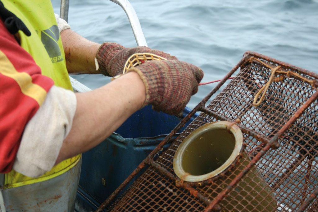 Pescador Artesanal: las nasas su herramienta de trabajo