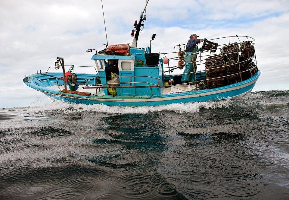 Pesca artesanal de pulpo (Galicia). (Foto: Alfonso Rego - WWF)