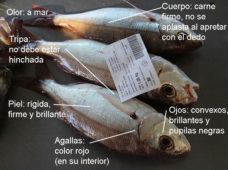 caracteristicas-del-pescado-fresco