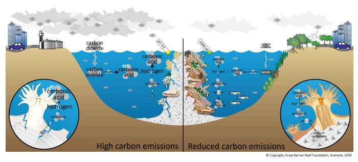 Acidificación de los océanos - Infografía: Vista al mar