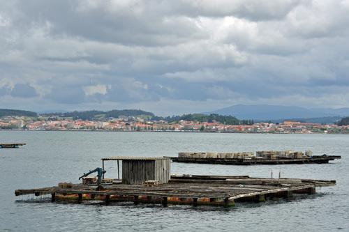 Bateas de mejillones en Galicia