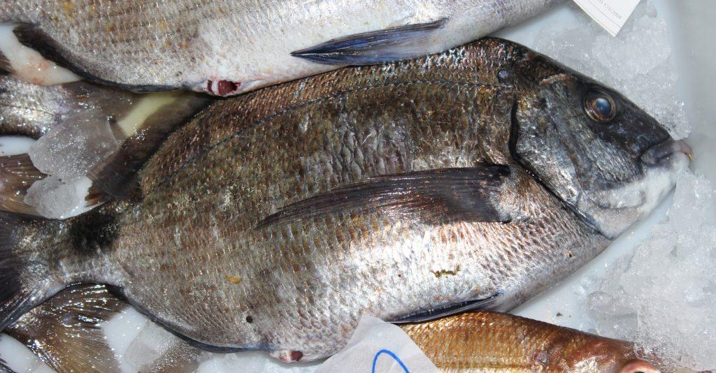 Como congelar marisco y pescado