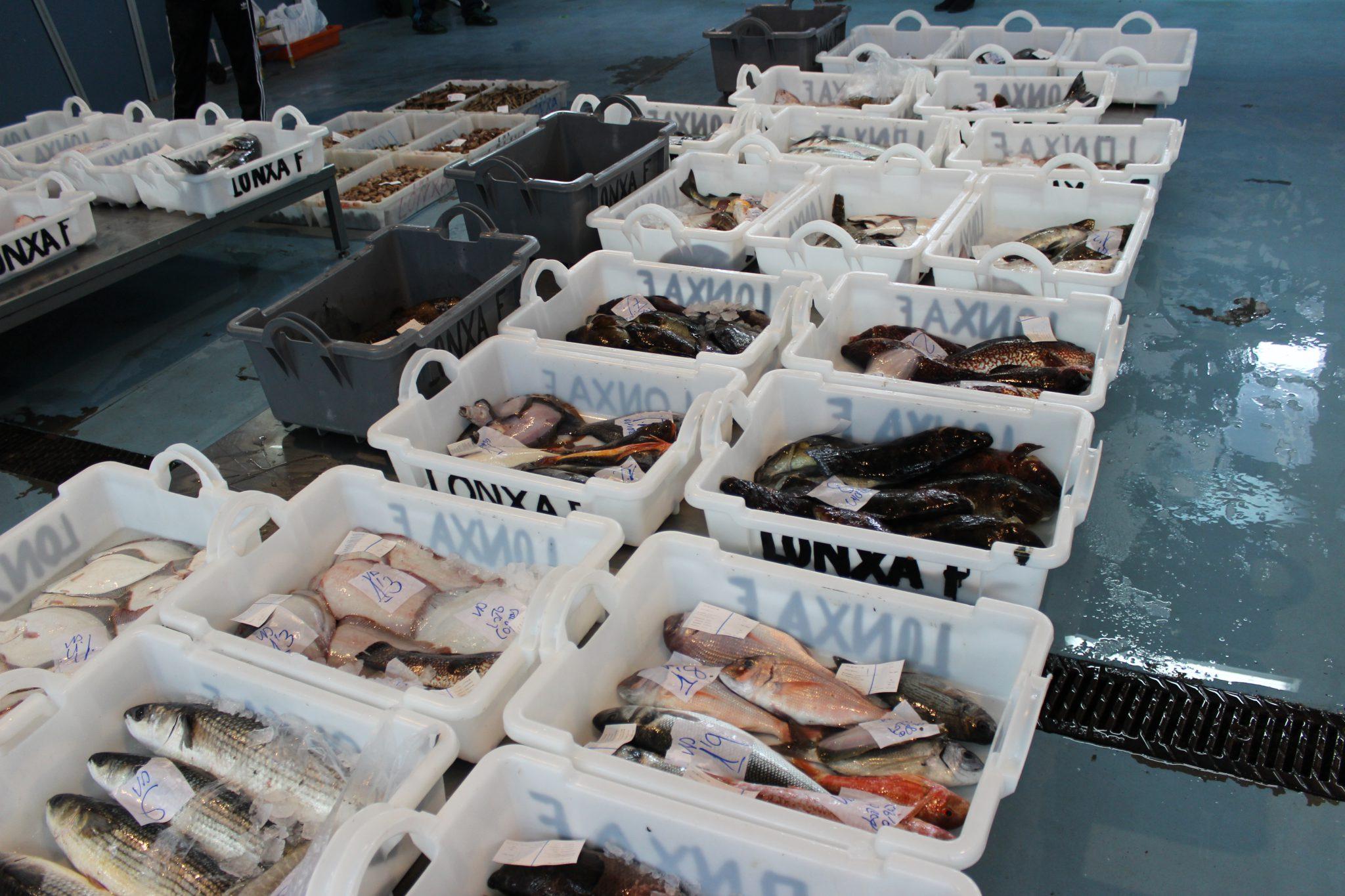 Consumo de pescado: venta de pescado fresco de pesca artesanal