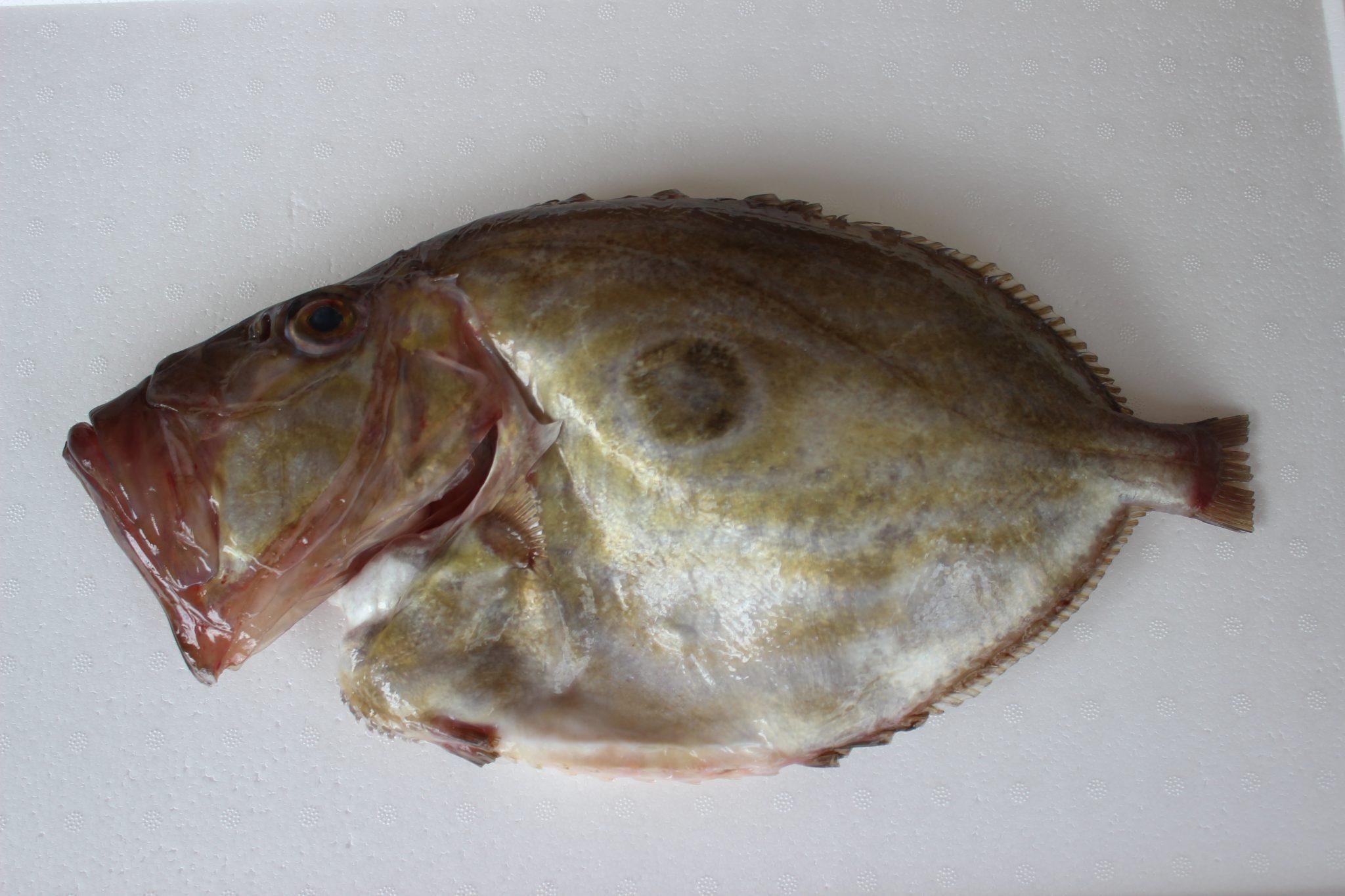 El pez San Pedro, un exquisito pescado fresco salvaje
