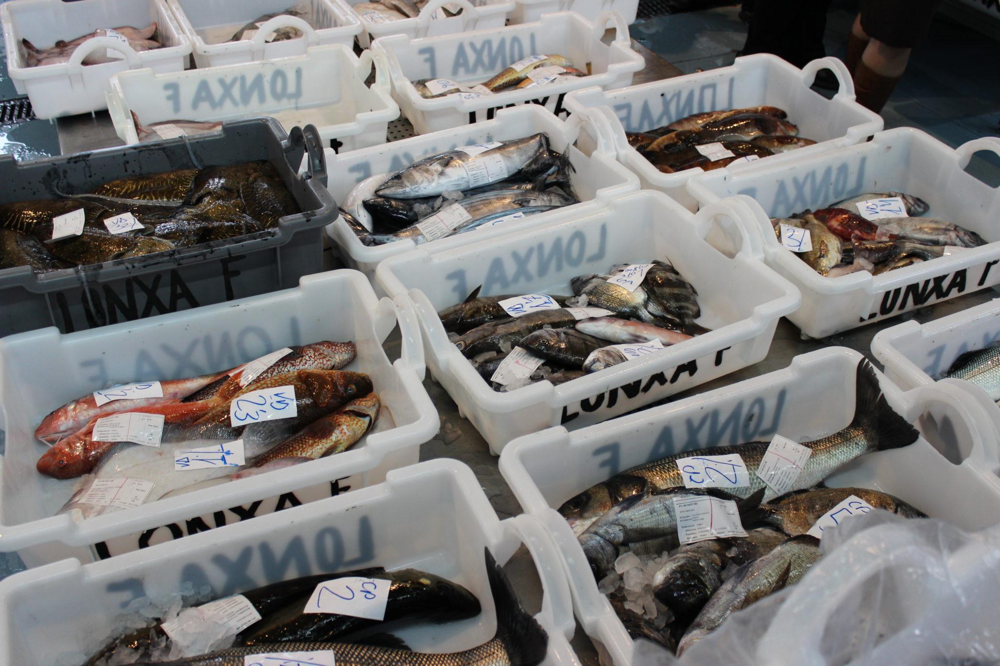 Compra lote de pescado fresco online. Auténtico pescado salvaje de Galicia