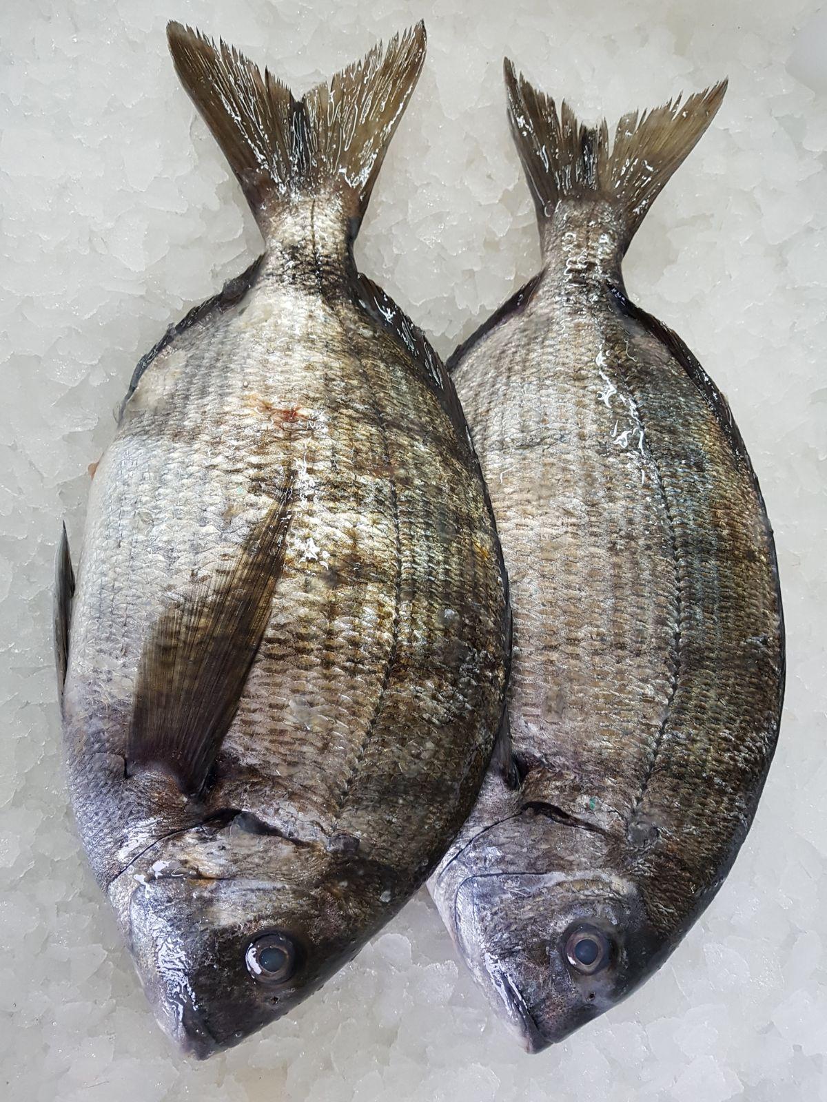 Sargo de la Costa da Morte, capturado mediante pesca artesanal y sostenilble