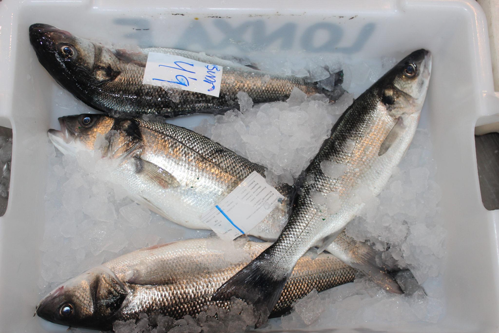 El pescado y marisco fresco (sin elaborar), son muy adecuados para la dieta de los celíacos
