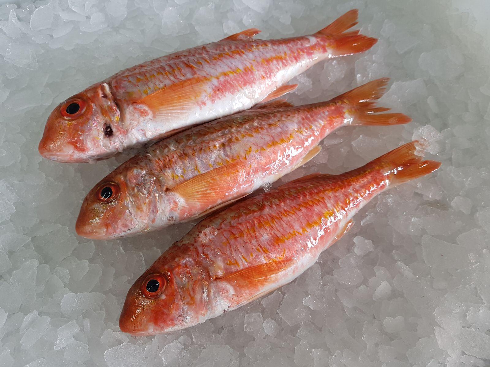 Salmonetes de Galicia