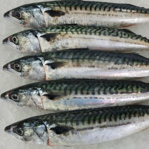 El 'rigor mortis' del pescado
