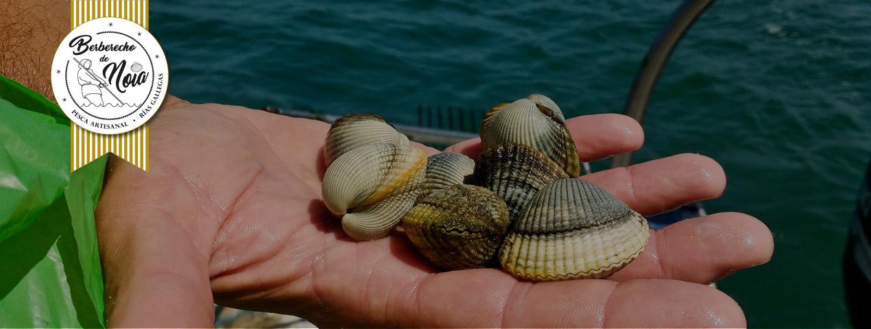 El auténtico «Berberecho de Noia» vuelve a nuestra pescadería online